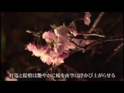 2015年1月31日(土)~2月1日(日)第53回名護さくら祭り / 名護中央公園、他