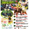 第11回勝山シークヮーサー花香り祭フライヤー表