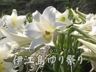 2015年4月18日(土)~5月6日(水)第20回伊江島ゆり祭り / 伊江島・リリーフィールド公園