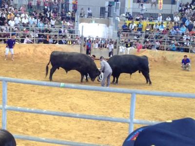 2015年8月9日(日)第6回夏の全島闘牛大会 / うるま市・石川多目的ドーム