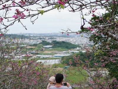 2016年2月7日(日)第10回 やえせ桜まつり / 八重瀬町・八重瀬公園