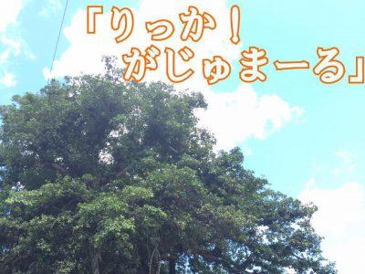 2016年10月29日(土)・30日(日)第23回名桜大学祭「名桜祭」 / 名護市・名桜大学
