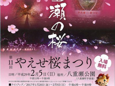 2017年2月5日(日)第11回 やえせ桜まつり / 八重瀬町・八重瀬公園