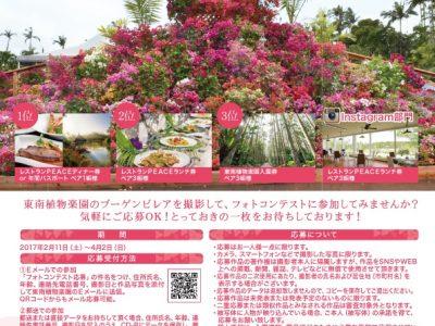 2017年2月11日(土)~4月2日(日)おきなわブーゲンフェア2017 / 沖縄市・東南植物楽園