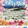 第22回伊江島ゆり祭りのフライヤー1